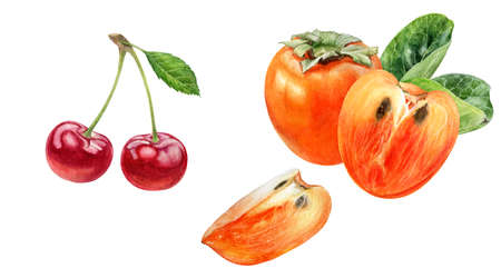 Persimmon cherry watercolor hand drawn illustration isolated on white background. Фото со стока