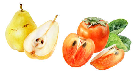 Persimmon pear watercolor hand drawn illustration isolated on white background.