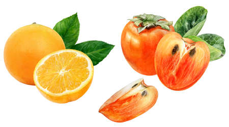 Persimmon orange watercolor hand drawn illustration isolated on white background. Фото со стока