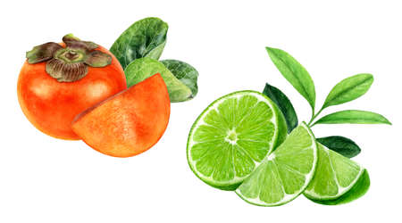 Persimmon lime watercolor hand drawn illustration isolated on white background.