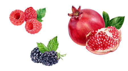 Pomegranate raspberry blackberry watercolor hand drawn illustration isolated on white background.
