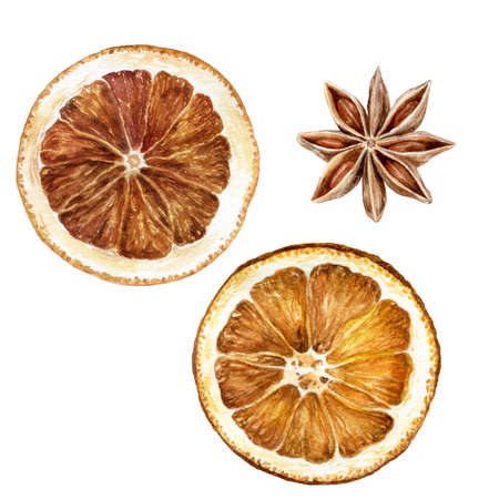 Anise star dried orange slices watercolor isolated on white background
