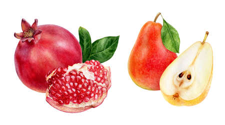 Pomegranate pear fruits set watercolor hand drawn illustration isolated on white background.
