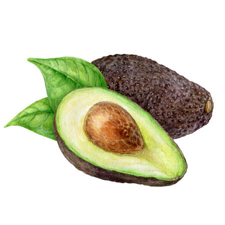 Avocado set watercolor hand drawn illustration isolated on white background.