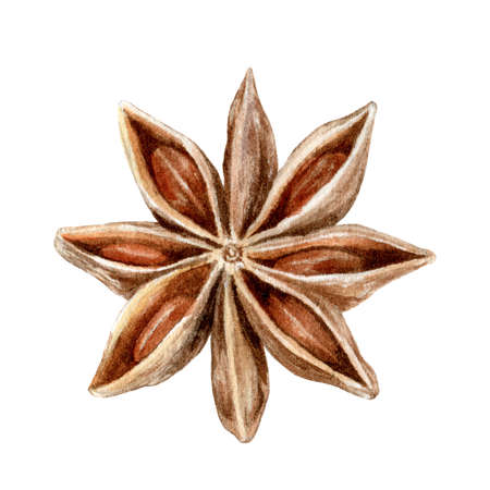 Anise star spice watercolor hand drawn illustration isolated on white background.