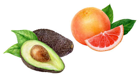 Avocado grapefruit set watercolor hand drawn illustration isolated on white background. 版權商用圖片