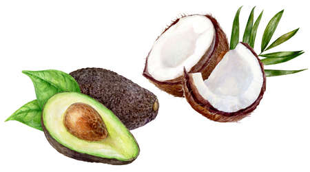 Avocado coconut set watercolor isolated on white background