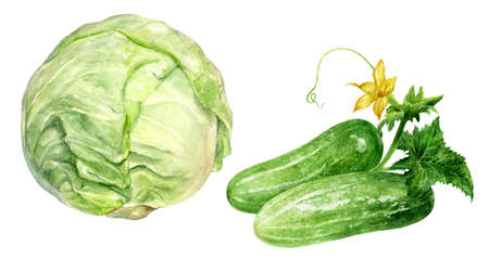 Cucumbers and cabbage watercolor isolated on white background Reklamní fotografie