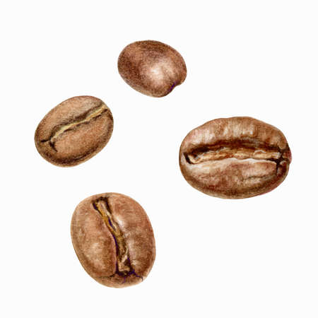 Coffee beens watercolor isolated on white background Reklamní fotografie