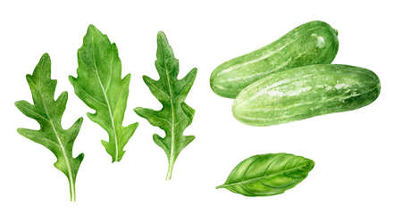 Cucumbers arugula watercolor hand drawn illustration isolated on white background.