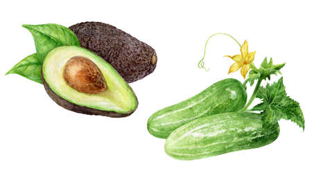 Cucumbers avocado watercolor isolated on white background Reklamní fotografie