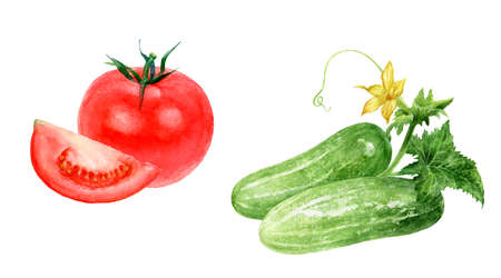 Cucumbers tomatoes watercolor isolated on white background Reklamní fotografie