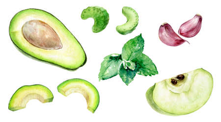 Green apple slice avocado half mint celery and garlic watercolor illustration isolated on white background