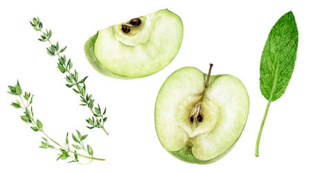 Green apple sage thyme spices watercolor illustration isolated on white background Reklamní fotografie