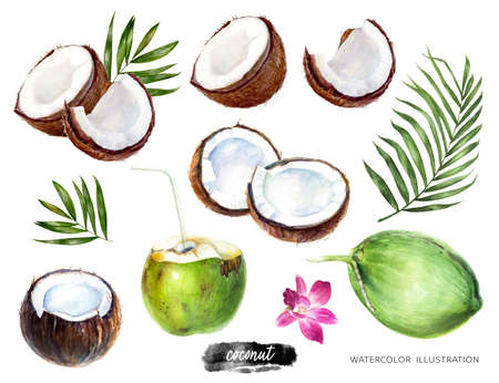 Coconut big set watercolor illustration isolated on white background