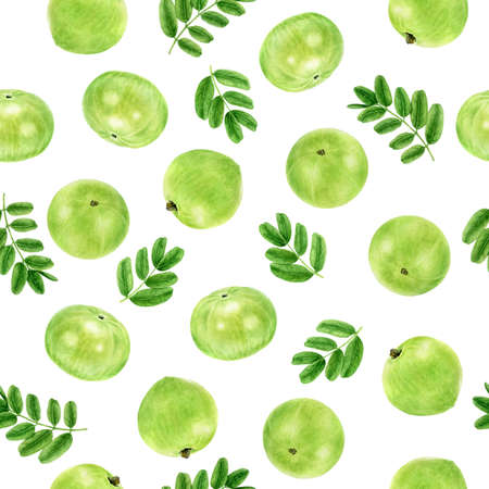 Watercolor seamless pattern amla isolated on white.