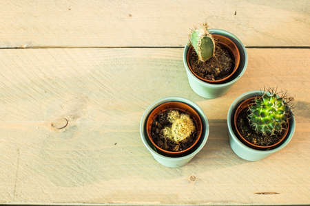 Green house plants potted, cactus top view vintage background Banque d'images