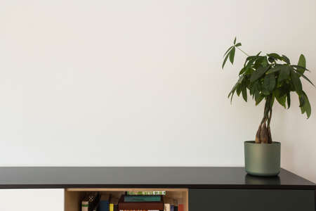 Houseplants and bookshelf near white wall, modern design livingroom, space for text Stockfoto