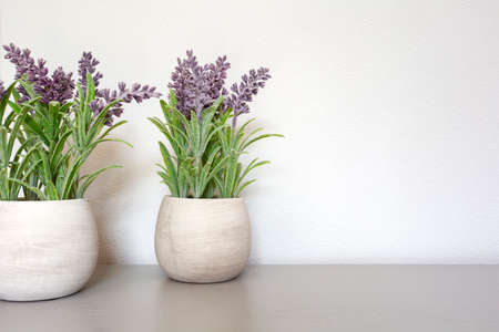 Bouquet of dry lavender in ceramic pot with white wall. Copy space for text. modern design