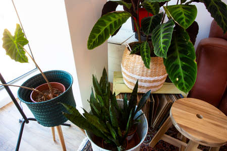 modern green house plants top view in the livingroom retro design various plants