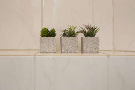 Tree little green house plants in ceramic pots white shiny wall