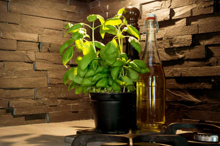 Fresh basil plant and oil and pepper in kitchen corner with black stone brick wall closeup