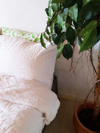 bedroom white linen and green house plant, modern design close-up Stok Fotoğraf