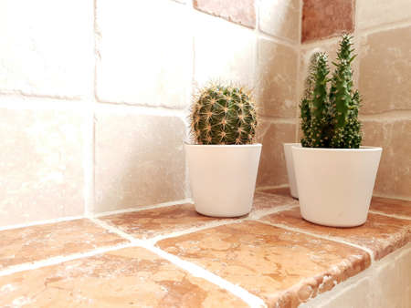 Collection of various in white pots. Potted cactus house plants on shelf against brick wall.