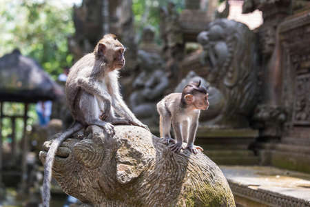 Two Monkeys standing on a temple ornament in Bali, looking at view in the jungle