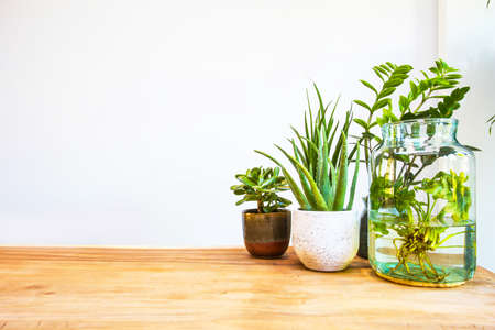 Stylish green house plants on wooden table with white background, modern design and space for text closeup Stock fotó