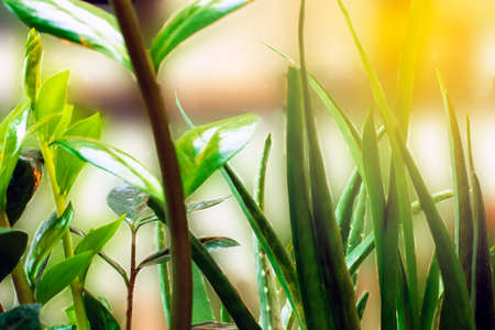 green summer shining grass in sunlightg. bright nature backgrounds blurred background