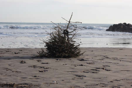 クリスマス ツリー 報道画像