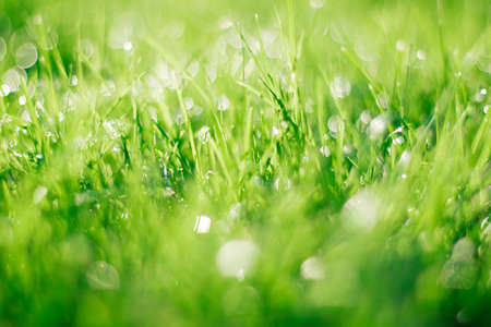 grass on backyard lawn - house, home and gardening concept