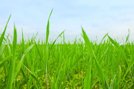 grass on backyard lawn - house, home and gardening concept, elegant visuals