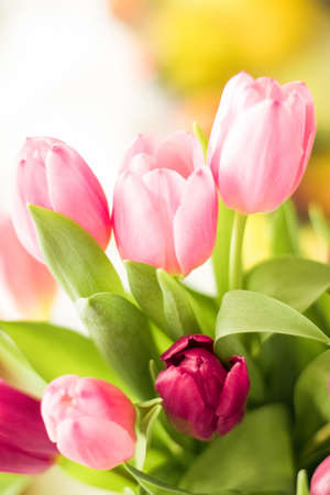 tulips in sunlight - floral, spring holidays and birthday gift styled concept
