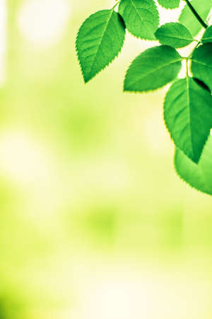 Fresh green leaves in spring - saving nature, healthy environment and bioenergy concept. The best time to plant a tree is now Stock Photo - 119467375