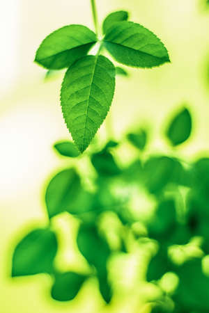 Fresh green leaves in spring - saving nature, healthy environment and bioenergy concept. The best time to plant a tree is now Stock Photo - 119900439