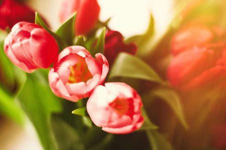 Bouquet of tulips in bloom - mothers day, springtime and international womens day concept. Brighten up your home with flowers Stok Fotoğraf