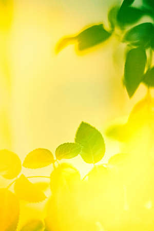 Fresh leaves and sunlight in spring - saving nature, healthy environment and bioenergy concept. Green energy is the future