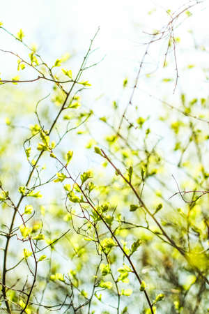Natural environment, botanical textures and bioenergy concept - Green leaves in springtime, nature background
