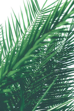 Botanical backdrop, exotic vacation and beauty in nature concept - Tropical palm leaves, floral background