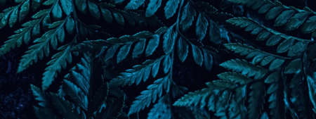 Blue plant leaves at night as surreal botanical background, minimal design backdrop
