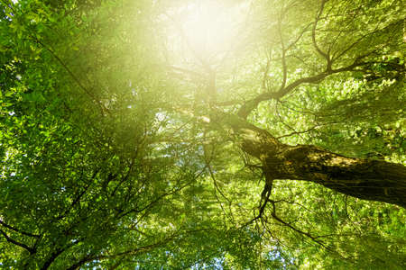 Belle nature ensoleillée de printemps et d'été, arbres dans le parc et scène de paysage extérieur