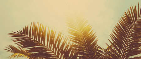 Tropical palm tree leaves in hot summer day as vintage background, summer nature and travel concept