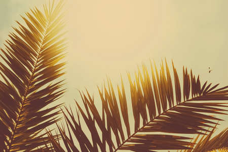Tropical palm tree leaves in hot summer day as vintage background, summer nature and travel concept Stock Photo