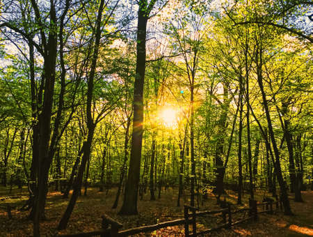 Spring forest landscape at sunset or sunrise, nature and environment Foto de archivo