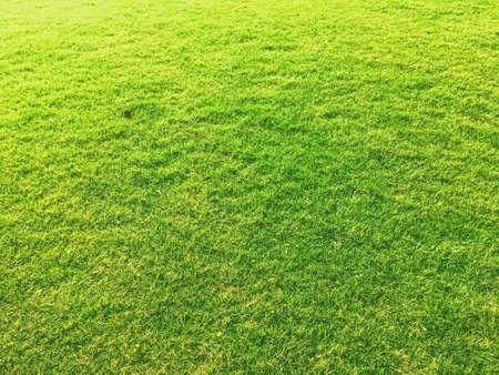 Pelouse d'herbe verte comme arrière-plan, nature et arrière-cour