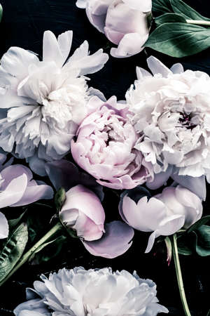 Pastel peony flowers as floral art background, botanical flatlay and luxury branding design Banque d'images
