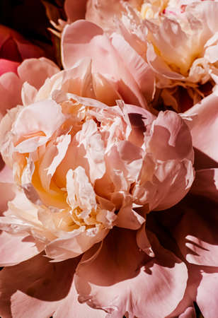 Peony flowers as luxury floral background, wedding decoration and event branding design