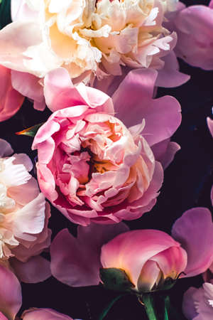 Pink peony flowers as floral art background, botanical flatlay and luxury branding design Banque d'images